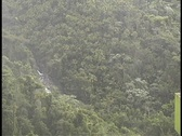 Stock Video Footage of Rainforest Forest canopy in rain