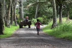 Rarotonga Lane with boy & tractor Stock Footage