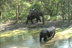 Rhino Royal Chitwan - stock footage