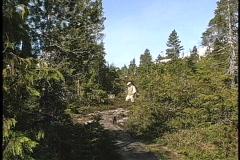 Solitude Walking a trail in Alaska Stock Footage