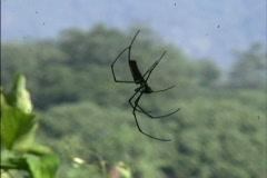 Spider walks on web Stock Footage