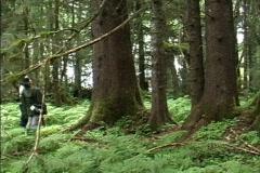Temperate rainforest AK Stock Footage