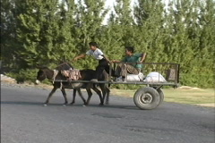 Transportation: Donkey cart Azerbaijan - stock footage