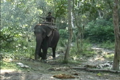 Riding an Elephant in Nepal Stock Footage