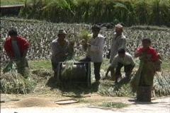 Thrashing rice in Nepal Stock Footage
