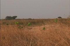 Tropical grassland Venezuela Stock Footage