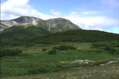 Tundra vegetation AK Stock Footage