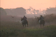 Venezuelan Cowboys at dawn Stock Footage