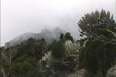 Mist in the Andes of Venezuela Stock Footage