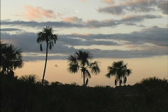 Palms & parrots sunset Stock Footage