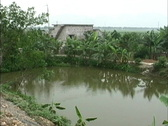 Vietnam Fish pond & farm house Stock Footage
