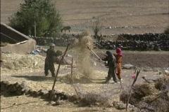 Winnowing Ladakh Stock Footage