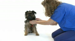 Dog with vet Stock Footage