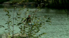 Kayaking at the River Stock Footage