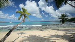 Beautiful beach with palmtrees Stock Footage