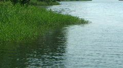 Lake Reeds with Calm Water Stock Footage