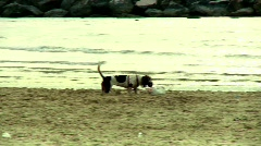 Dog runnig in the beach 2 Stock Footage