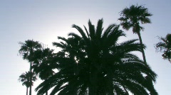 Silhouetted palm trees Stock Footage