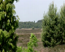 Ginkel Heath, 1944 dropzone near Ede and Arnhem Stock Footage