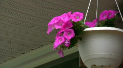 Hanging Flower Pot Stock Footage