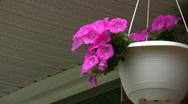 Hanging Flower Pot Stock Footage