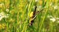 Locust Footage