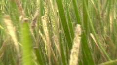 Underwater Travel Through Seagrass Slow Motion - stock footage