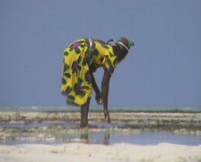 Women with yellow dress looking for shells on Zanzibar island  Stock Footage