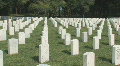 Florida National Cemetery Clip 7 HD Footage