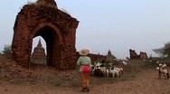 Stock Video Footage of Burmese woman herding goats in Bagan, Burma Myanmar