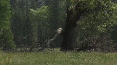 Lightning struck tree Stock Footage
