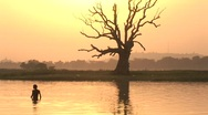 Stock Video Footage of boys swimming infront of tree(5)