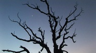 Stock Video Footage of Silhouette of tree with moon