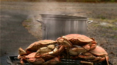 Dungeness crab Stock Footage