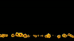 Sunflowers on lower part of the screen - digital animation Stock Footage