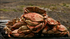 Freshly cooked crab Stock Footage