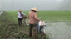 Vietnamese rice workers Stock Footage