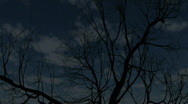 Moon and tree Stock Footage