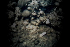 Eastern Mole Digging Through Soil Stock Footage