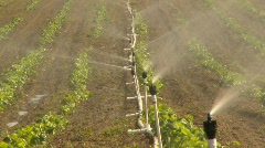 Agriculture, strawberry field irrigation, #3 Stock Footage