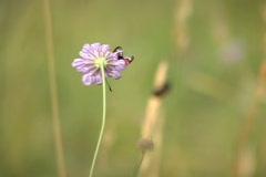 Bugs on the flower (rack focus) Stock Footage