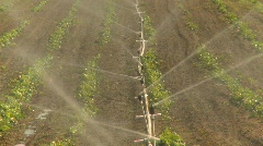 Agriculture, strawberry field irrigation, #2 Stock Footage