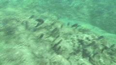 underwater fish - stock footage