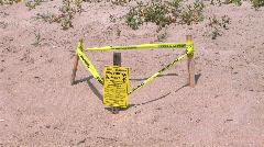 turtle nest - stock footage