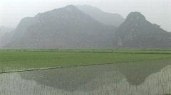 Vietnam rice fields Stock Footage