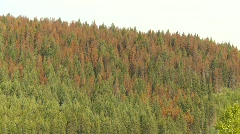 The environment, mountain pine beetle killed trees, #6 montage Stock Footage