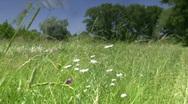 Meadow flowers. Stock Footage