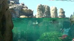 Humboldt penguins swimming 896-2 Stock Footage