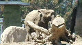 Elephant Walking by Stump HD Footage