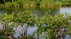 Florida Everglades River Stock Footage